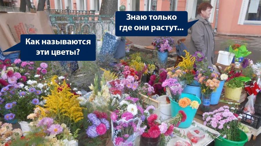 ForPost - Новости : Чаще всего цветы с клумб на ЮБК воруют пенсионеры