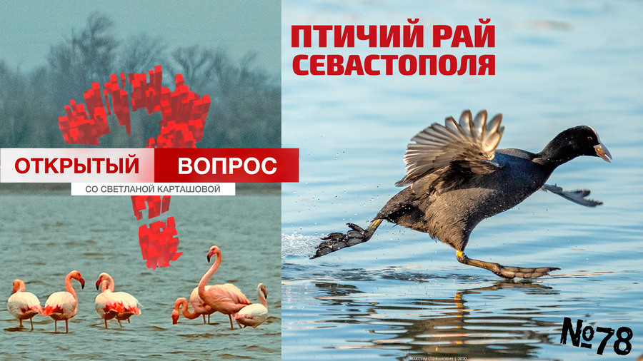 ForPost - Новости : Открытый вопрос: Для кого Севастополь – райское место?