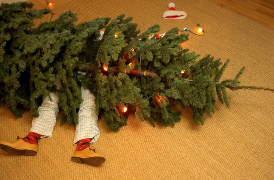 ForPost - Новости : Что делать с отслужившими елками в Севастополе