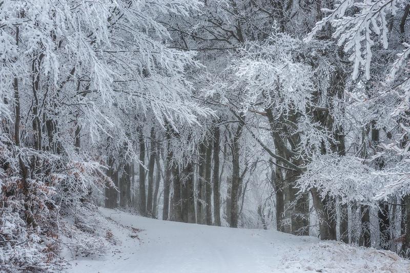 ForPost - Новости : На юге Крыма дорожники устроили снежную «диверсию»
