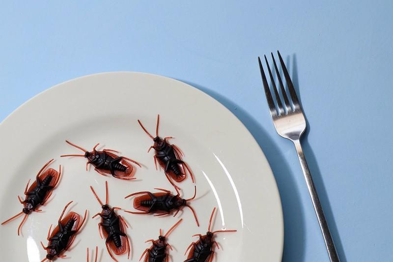 ForPost - Новости : В Крым нагрянет марокканская саранча и тараканы