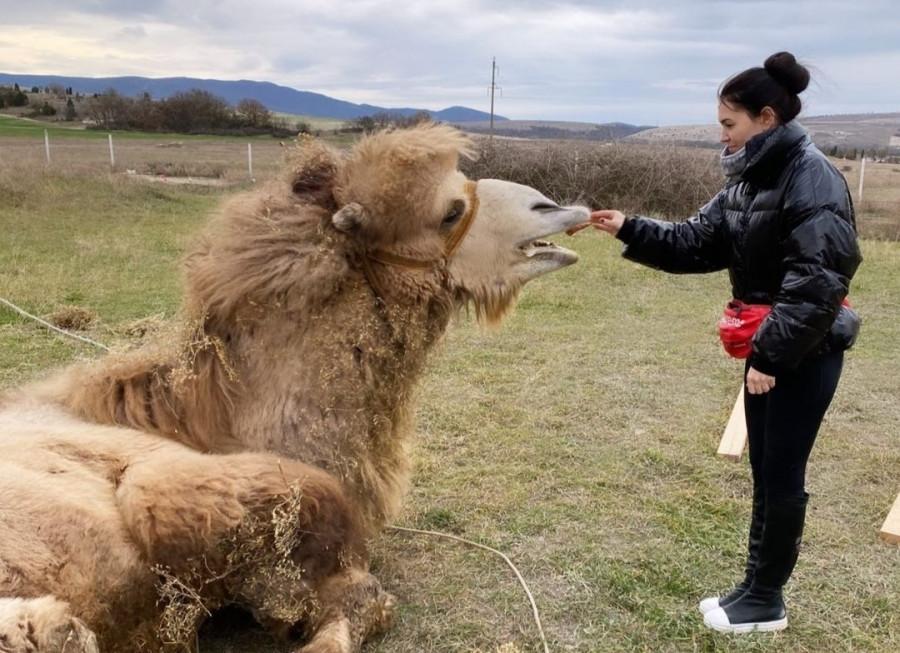 ForPost - Новости : Жительница Севастополя спасла верблюда от продажи на мясо