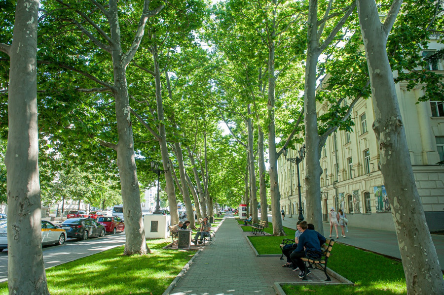 ForPost - Новости : «Наш город особый»: в Севастополе появится перечень мемориальных деревьев