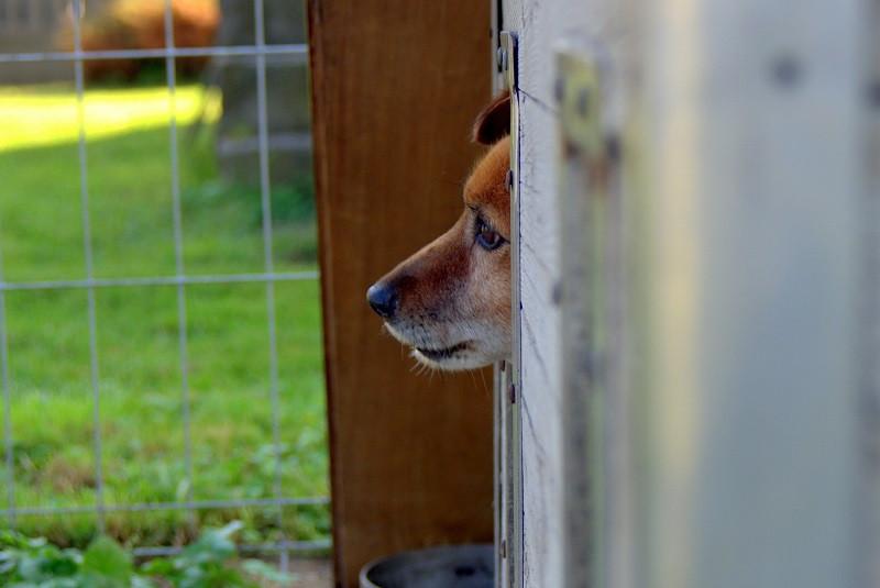 ForPost - Новости : Приют для бездомных животных Севастополя откроют в Орловке