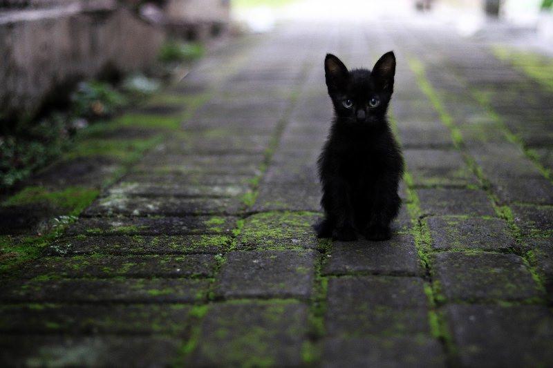 ForPost - Новости : В Крыму откроют парк породистых и бездомных кошек