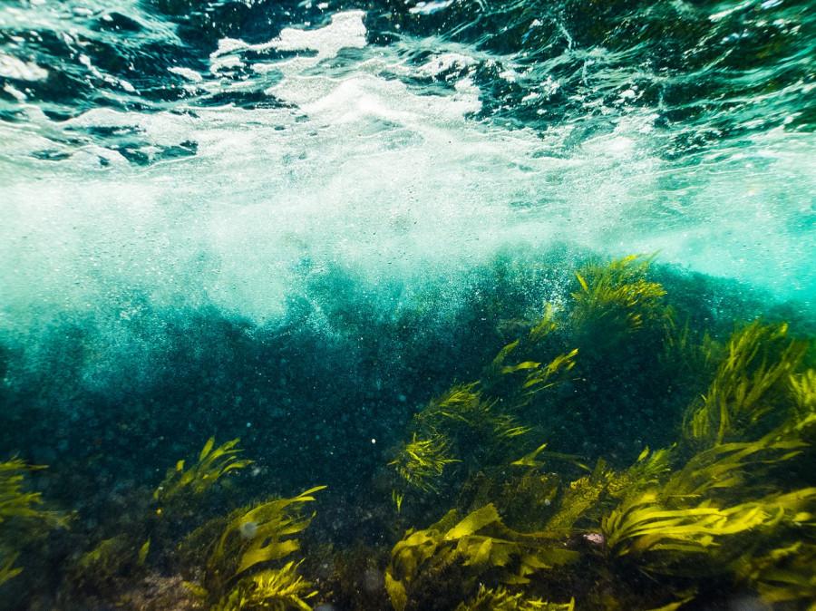 ForPost - Новости : В озере Севастополя обнаружили суперсредство против рака и атеросклероза