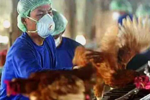 ForPost - Новости : В России выявили первое в мире заражение людей птичьим гриппом H5N8