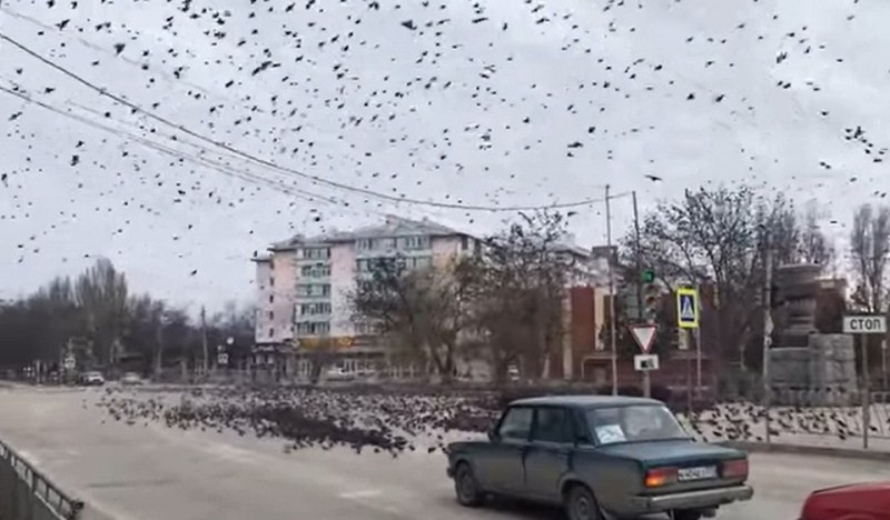 ForPost - Новости : В Феодосии огромная стая скворцов устроила апокалипсис