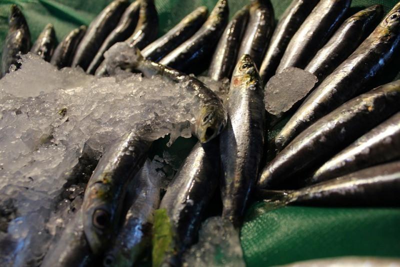 ForPost - Новости : Крымчан пугают отравленной рыбой из-за ЧП на турецком сухогрузе