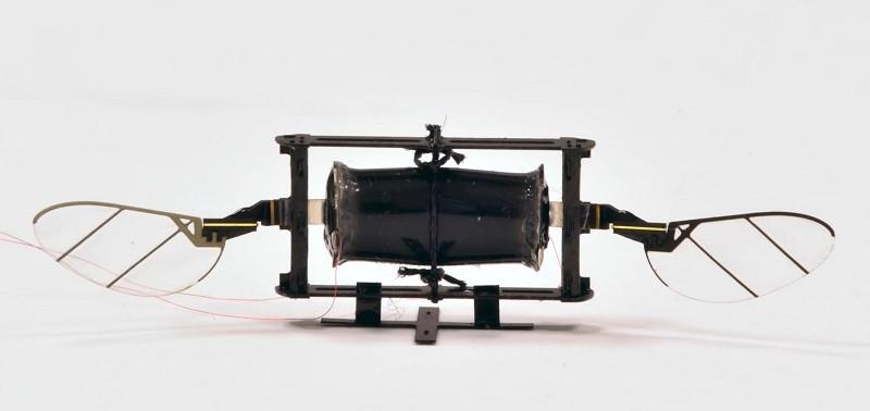 В США разработали дрон-насекомое размером со шмеля. Видео