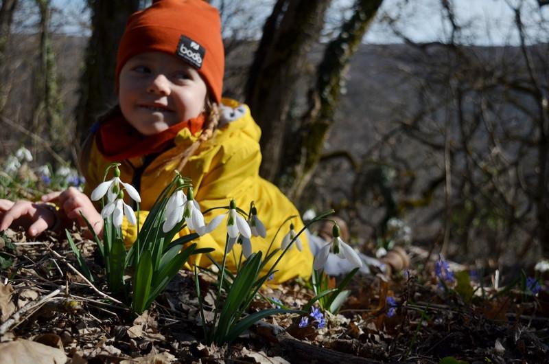 ForPost - Новости : Дикие и красивые: где в горном Крыму любоваться первоцветами