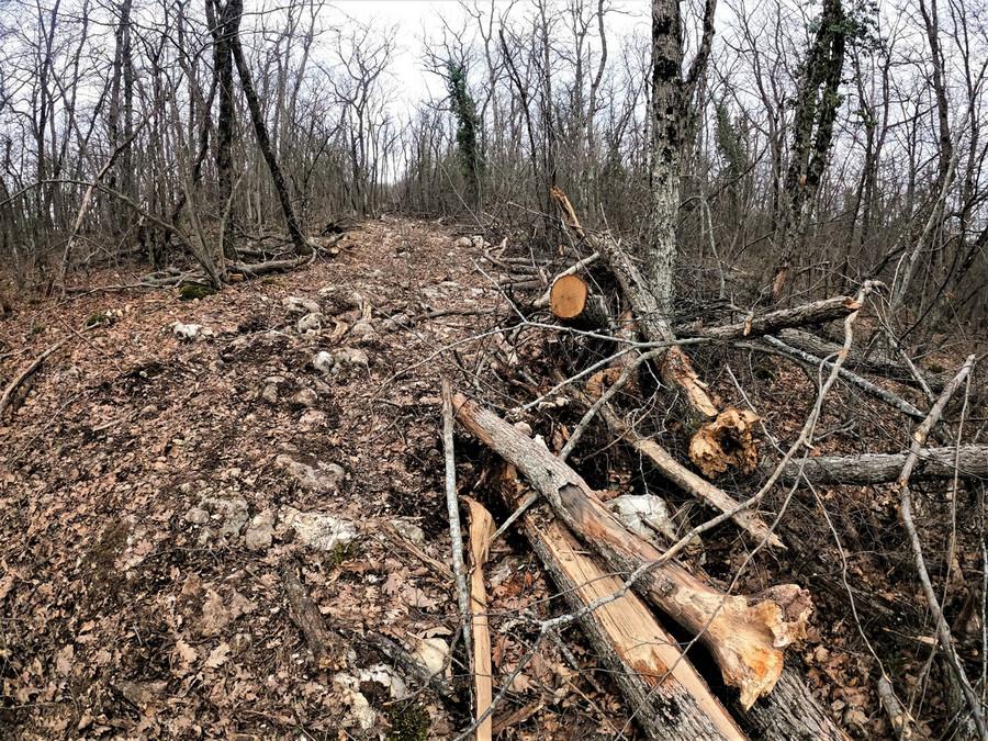 ForPost - Новости : В районе Большой Севастопольской тропы обнаружили вырубку деревьев