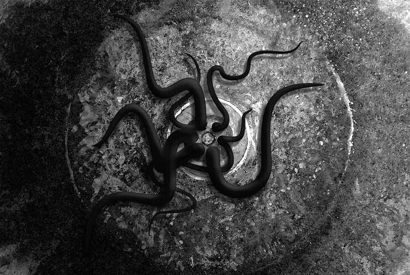 ForPost - Новости : На крымском побережье нашли останки странного существа