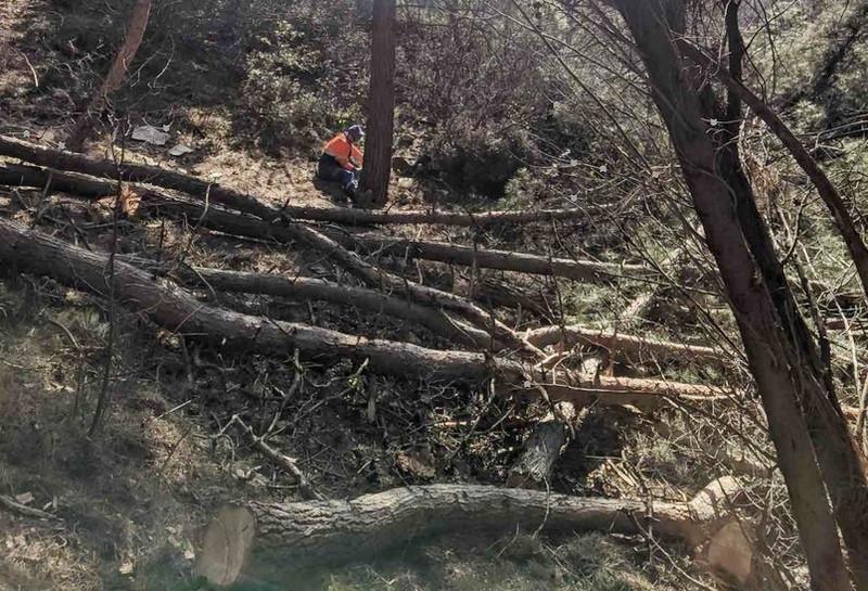ForPost - Новости : Девелопер из Москвы вырубил старинные деревья на Южном берегу Крыма
