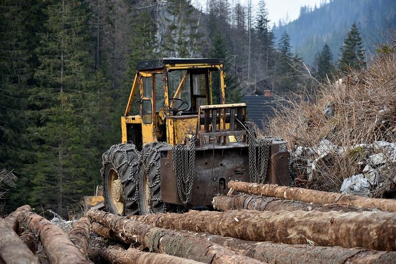 ForPost - Новости : Вырубка лесов в Крыму может вызвать эпидемии