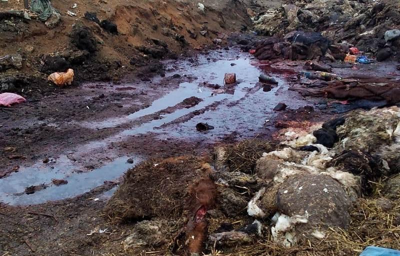 ForPost - Новости : Воняет и разлагается: скотомогильник на севере Крыма никто не контролирует