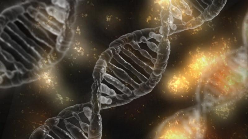 В мозге человека обнаружены «гены-зомби»