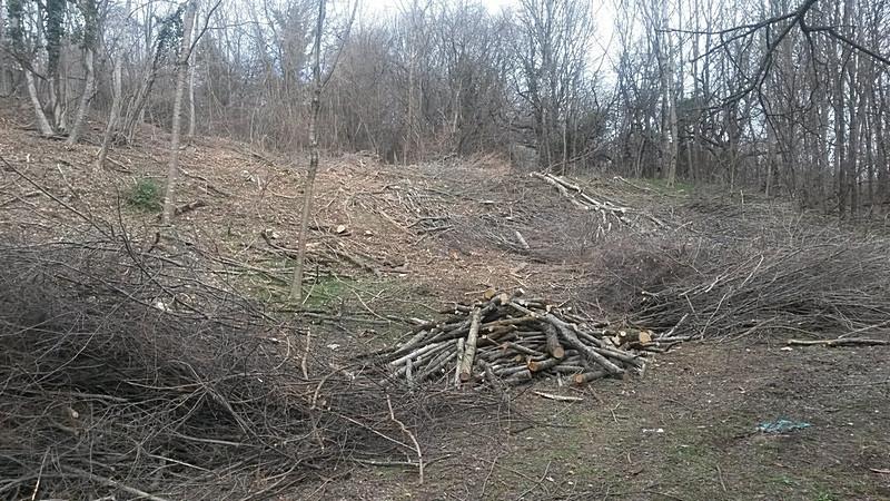 ForPost - Новости : В горах Крыма снова рубят лес под частную застройку