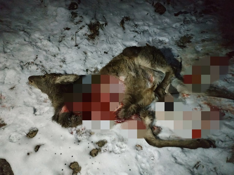 ForPost - Новости : На Южном берегу Крыма найдены растерзанные туши