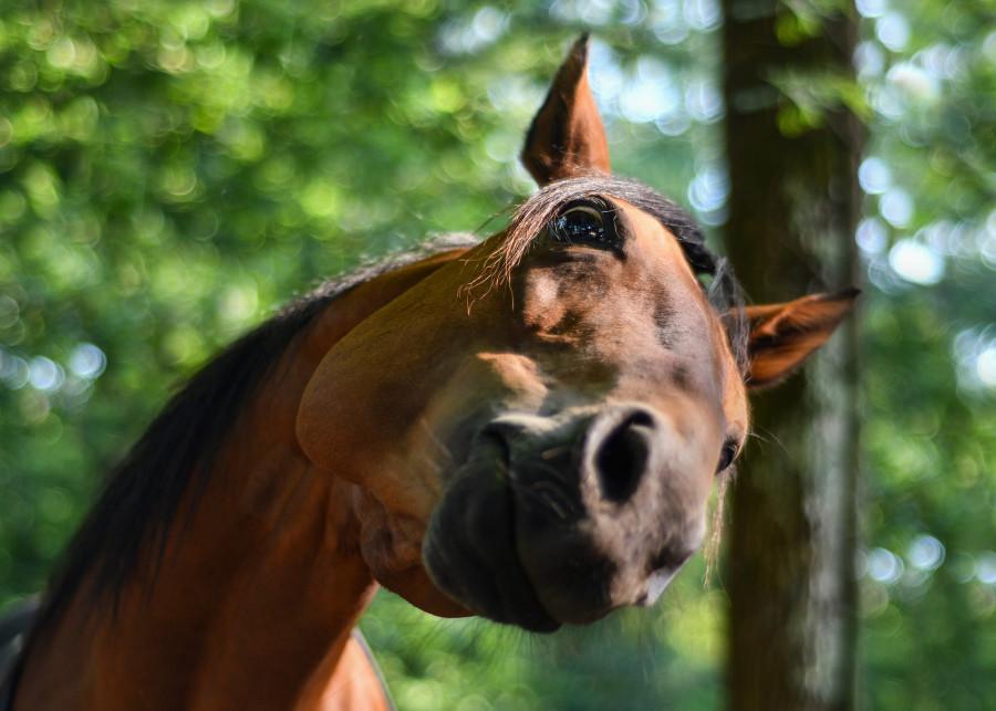 ForPost - Новости : Женщина в Севастополе травмировалась при падении с незаконной лошади