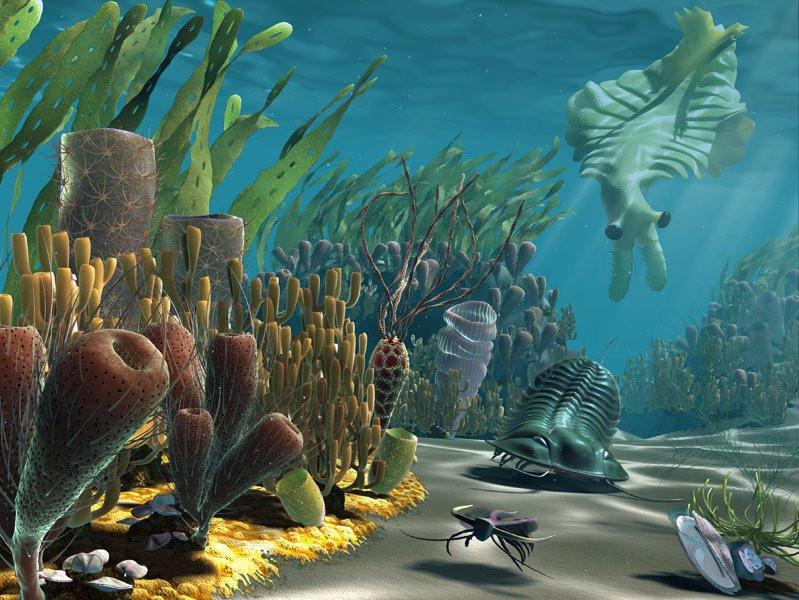 Генами с человеком поделились безголовые существа из океана