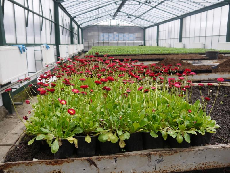 ForPost - Новости : Поющий Горзеленхоз: как растят городские цветы в Крыму