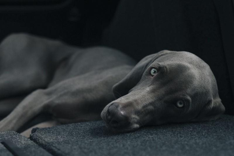ForPost - Новости : В Крыму нашли труп еще одной изувеченной собаки 18+