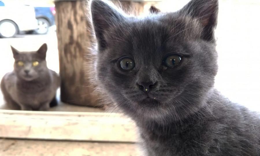 ForPost - Новости : СевСети #1212. Интеллигентная семья котов и блаженные Севастополя