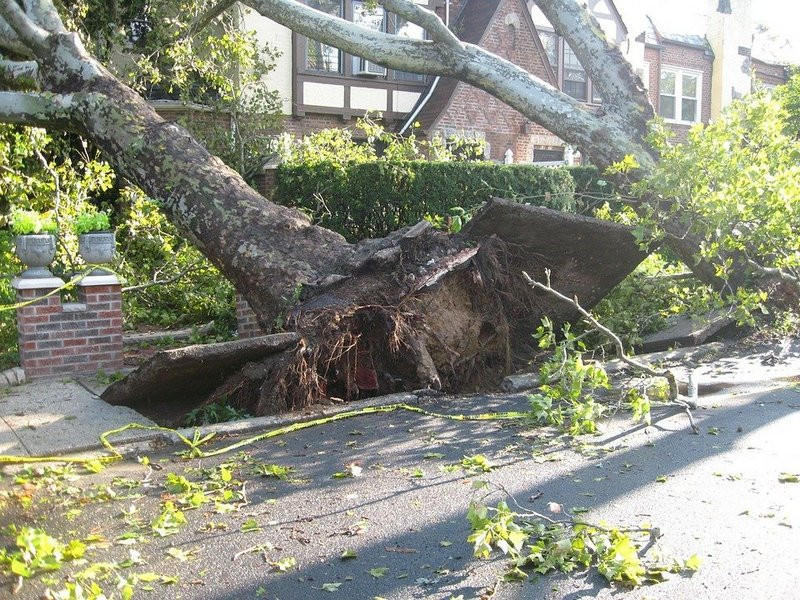 ForPost - Новости : На крымчанку с младенцем рухнуло сухое дерево