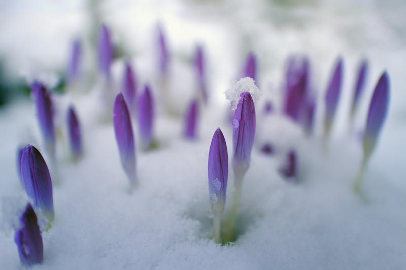 ForPost - Новости : Весна ушла из Крыма