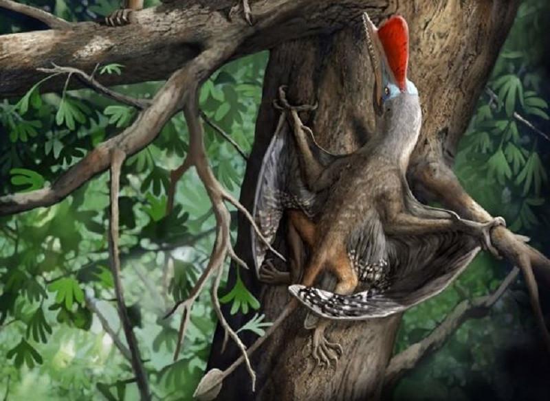 ForPost - Новости : В Китае обнаружили новый вид летающего динозавра