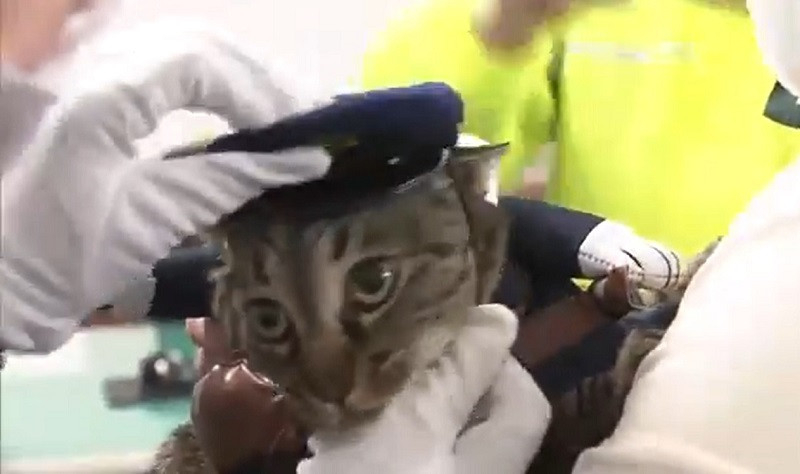 ForPost - Новости : Японская кошка стала главой полицейского управления на день