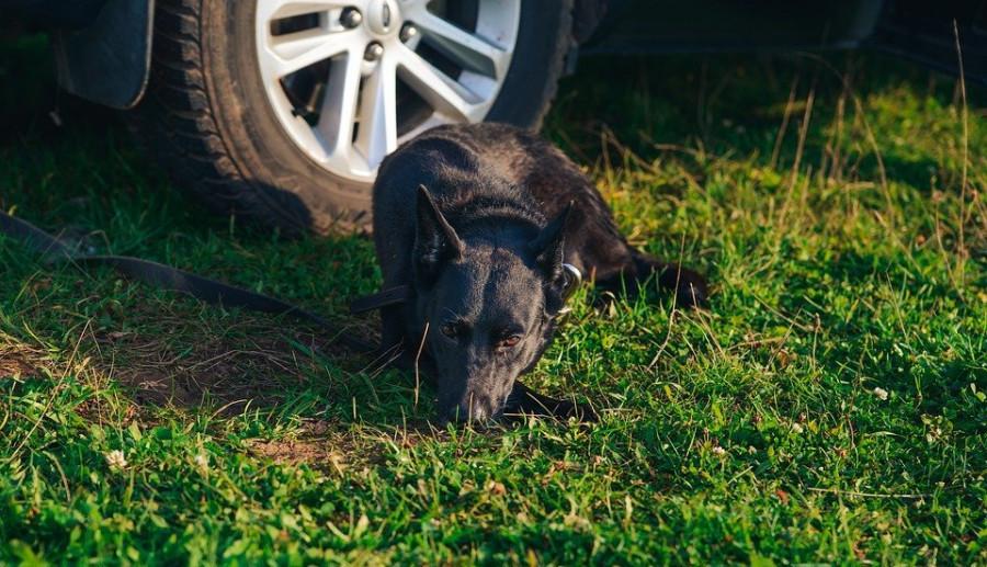 ForPost - Новости : Газон или просто трава: как один иностранный автомобиль вскрыл сразу несколько проблем Севастополя