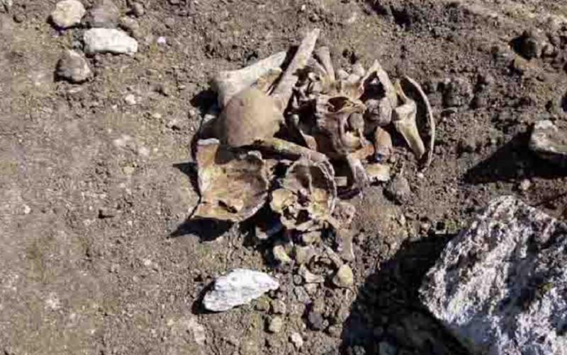 ForPost - Новости : В Крыму при прокладке газопровода разорили мусульманское кладбище
