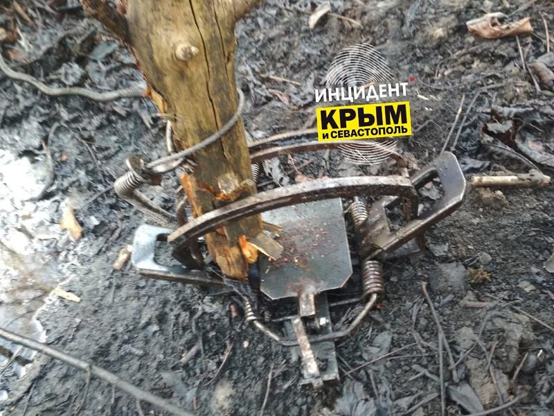 ForPost - Новости : В крымских лесах начали находить смертельные капканы
