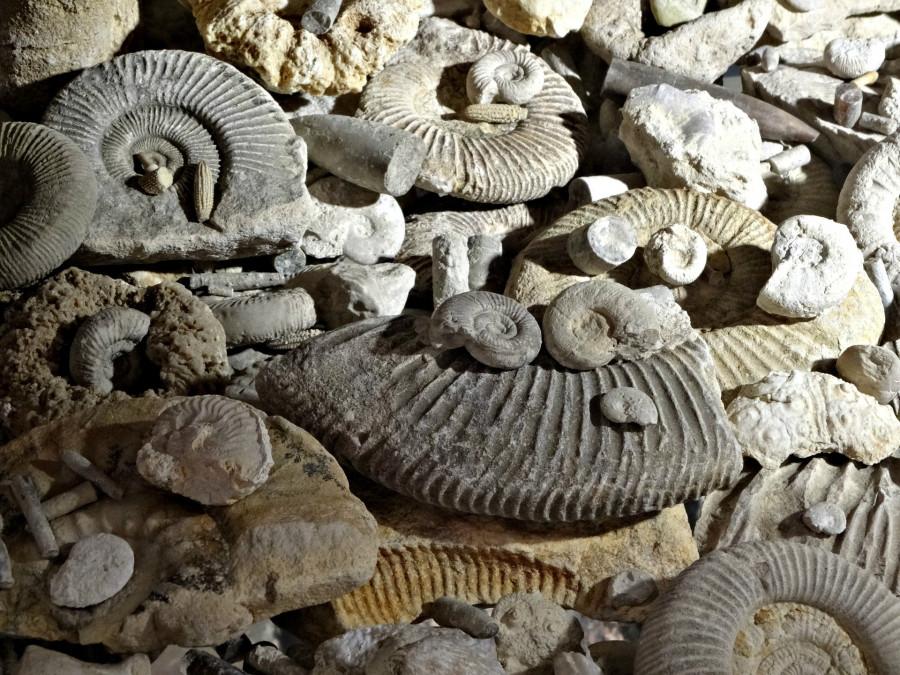 ForPost - Новости : Знаменитый палеонтологический музей Севастополя ютится в гараже