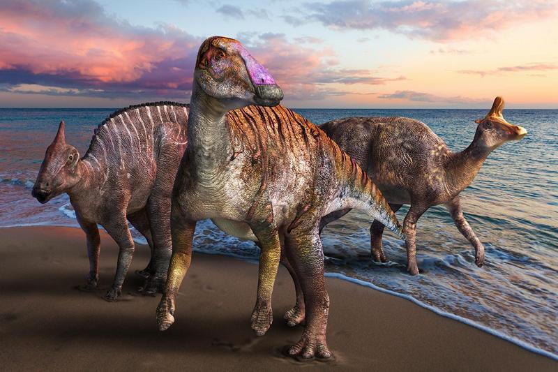 ForPost - Новости : В Японии нашли новый вид динозавров