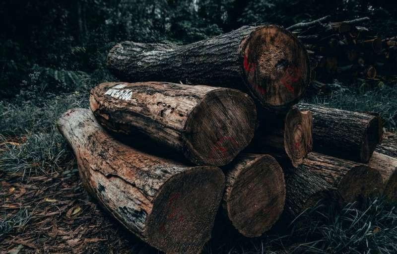 ForPost - Новости : В столице Крыма устроят настоящую зачистку деревьев