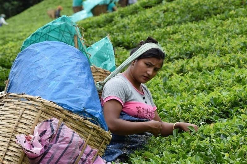 ForPost - Новости : Россиян предупредили о серьёзном росте цен на чай