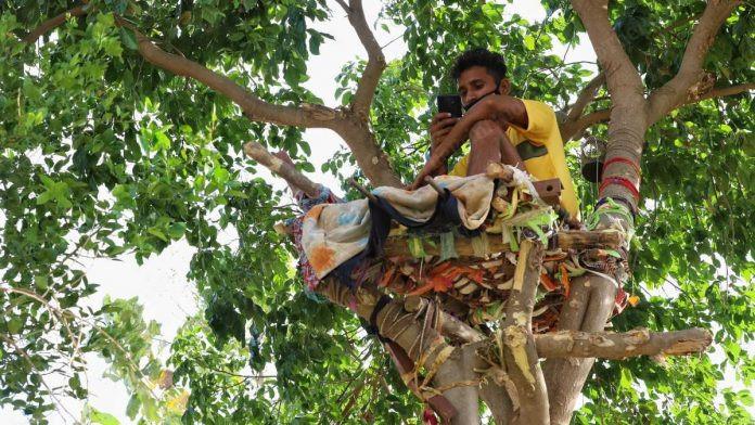 ForPost - Новости : В Индии студент полторы недели просидел на дереве из-за коронавируса