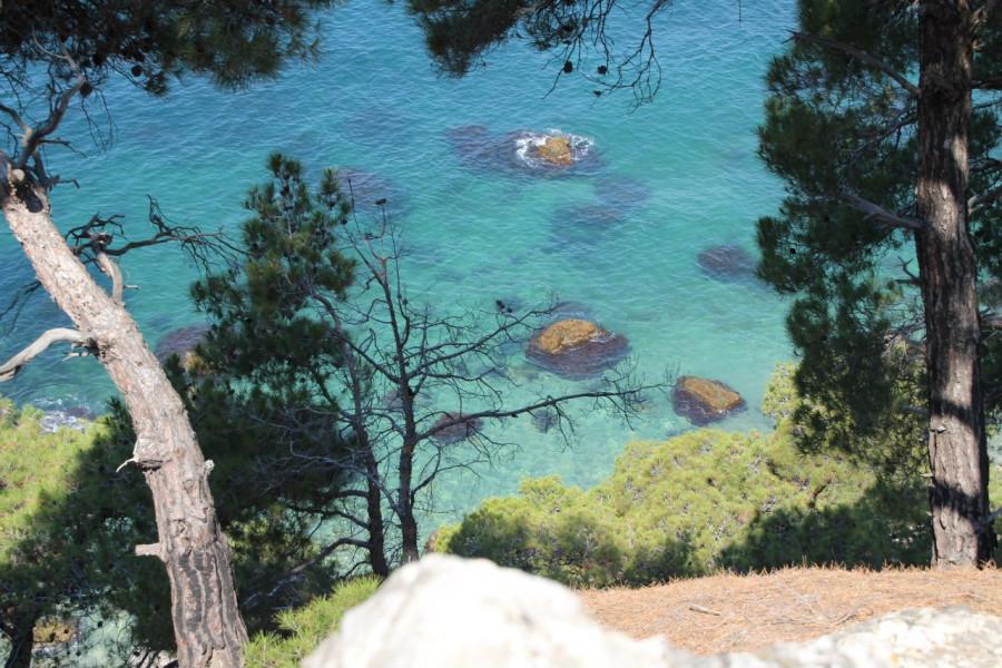 ForPost - Новости : Севастопольское лесничество прокомментировало объявление о VIP-пляже на Инжире