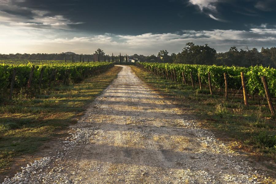 ForPost - Новости : Причиной застройки виноградников Балаклавы оказались бездомные агрономы