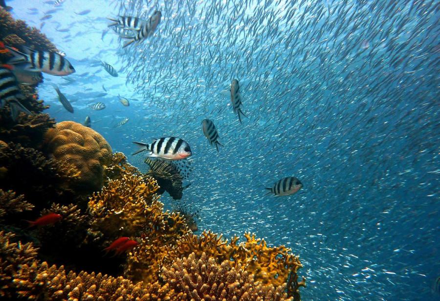 ForPost - Новости : Учёные сообщили, что рыбная ловля опасна для климата