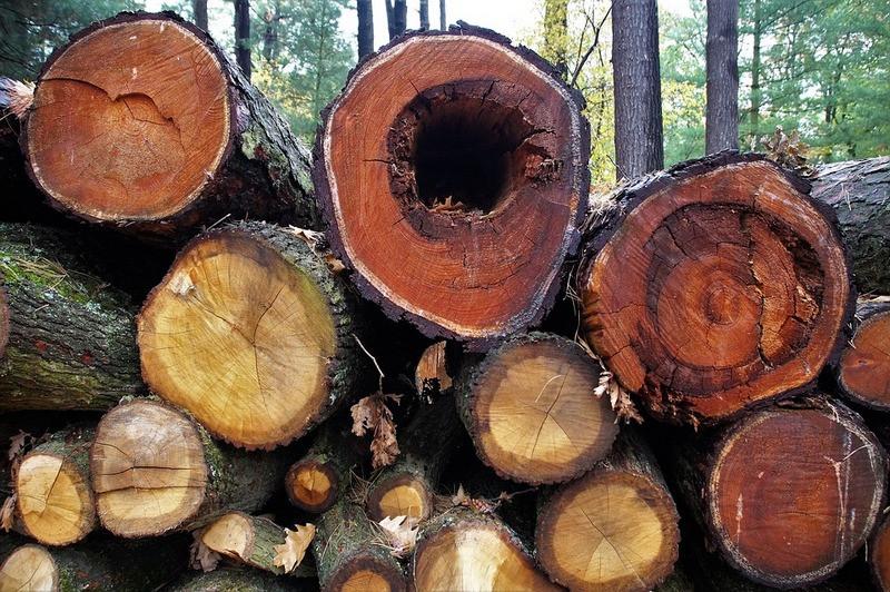 ForPost - Новости : Чиновник закрыл глаза на вырубку реликтовых деревьев на ЮБК