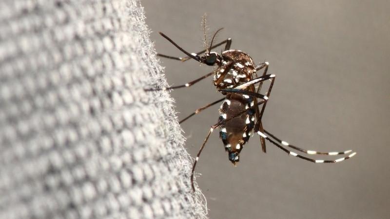 ForPost - Новости : Россиян озадачили нашествием «комаров-тигров» на побережье Чёрного моря