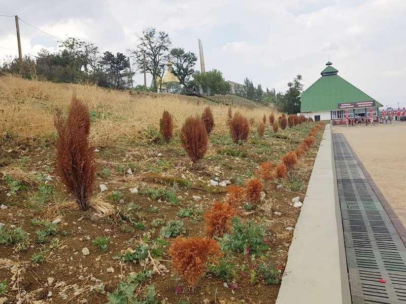 ForPost - Новости : В Крыму удивляются новому «рыжехвойному» виду деревьев