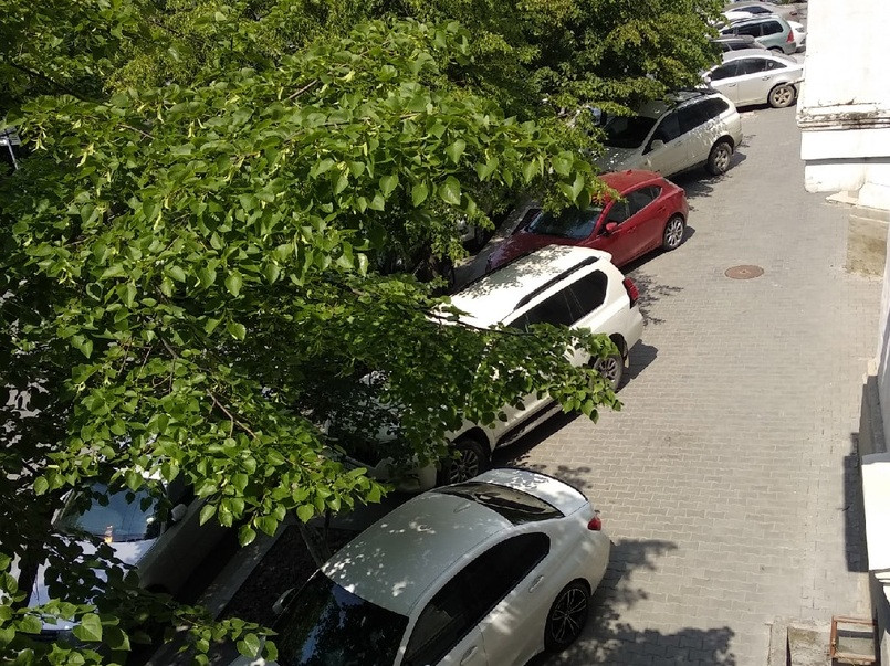 ForPost - Новости : Севсети#1250: Съеденные деревья, новое лицо севастопольского избиркома и миродержавная сила