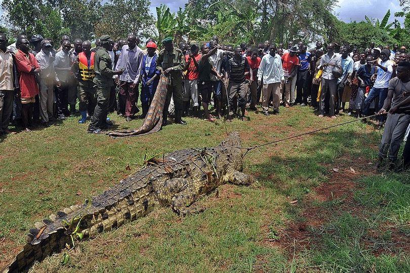 ForPost - Новости : Крокодил, названный в честь бен Ладена, убил десятки человек