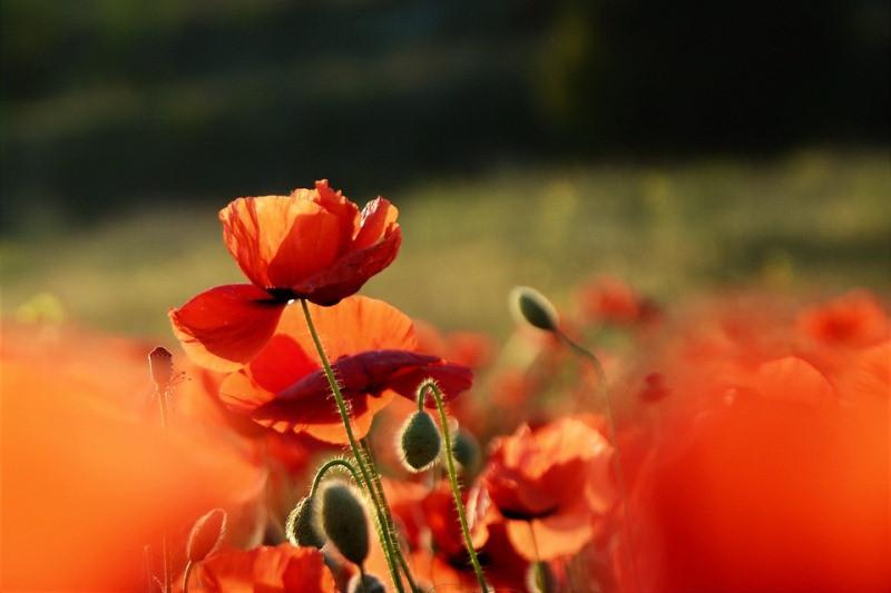 ForPost - Новости : Крымских огородников начинают «кошмарить» из-за мака
