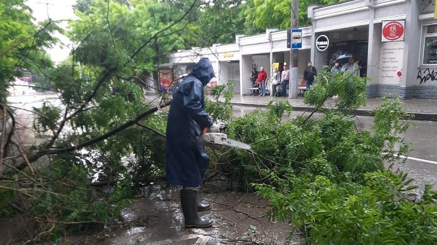 ForPost - Новости : Непогода погубила в Севастополе около 40 деревьев